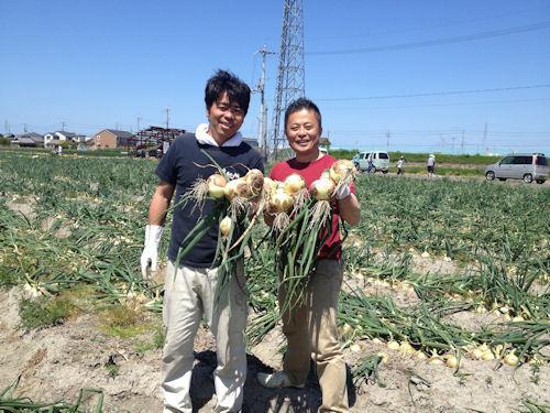 おいしい焼肉のたれ ランキング 焼き肉のたれレシピ おいしいぽん酢の情報ブログ!日本一おいしいたれを作りたい たれ番長の365日-泉州たまねぎの収穫を手伝って、射手矢農園